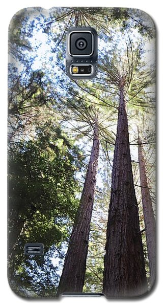 Redwoods, Blue Sky Galaxy S5 Case