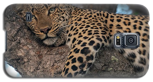 Relaxed Leopard Galaxy S5 Case
