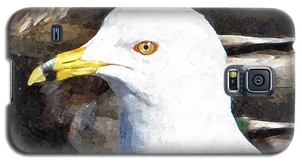 Ringbilled Gull Portrait Galaxy S5 Case