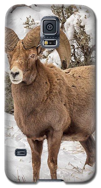 Rio Grande Bighorn Galaxy S5 Case