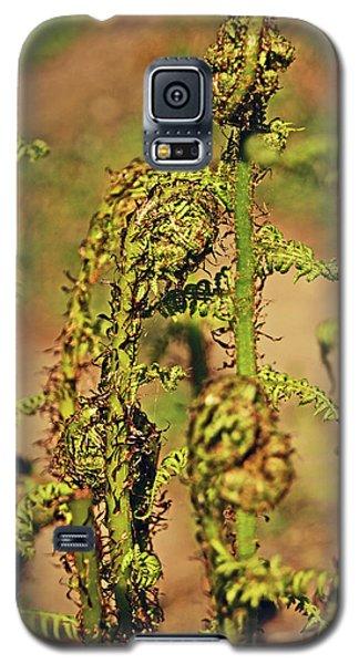 Rivington Terraced Gardens. Fern Frond. Galaxy S5 Case