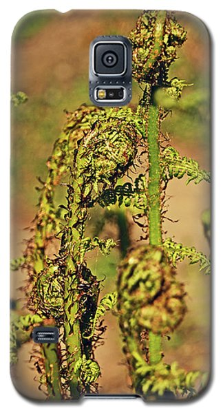Rivington Terraced Gardens. Fern Frond. Galaxy S5 Case