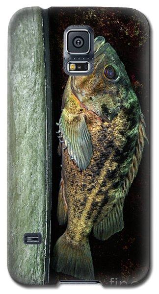 Rockfish Relaxing Galaxy S5 Case