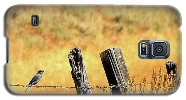 Rocky Mountain Blue Bird Galaxy S5 Case