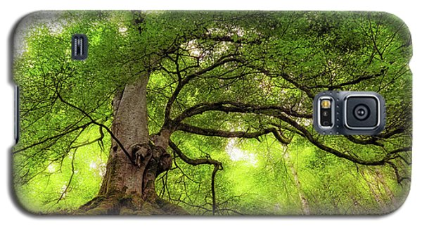 Roots Of Taymouth Estate - Scotland - Beech Tree Galaxy S5 Case