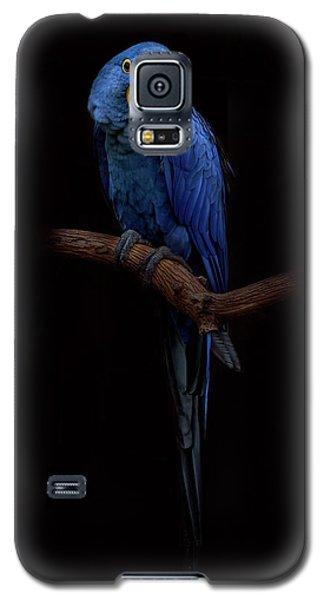 Royal Blue Beauty  Galaxy S5 Case