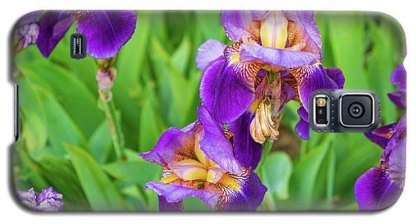 Royal Purple Irise Galaxy S5 Case