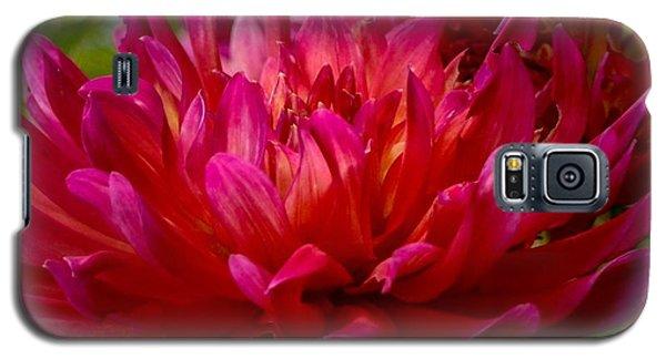 Ruby Red Dahlia Galaxy S5 Case