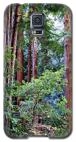 Samuel Taylor Redwoods 1 Galaxy S5 Case