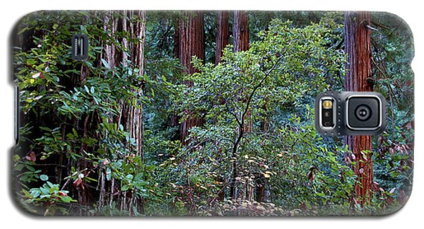 Samuel Taylor Redwoods 2 Galaxy S5 Case