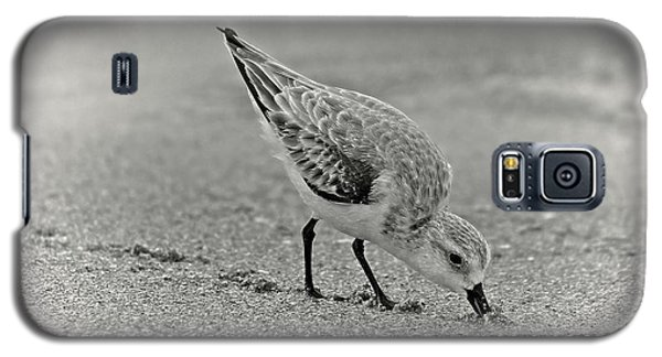 Sanderling Foraging For Food Galaxy S5 Case