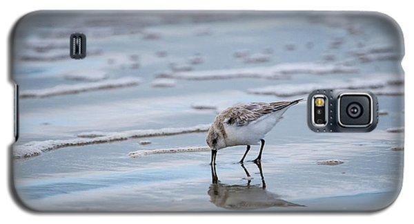 Sanderling Foraging Galaxy S5 Case