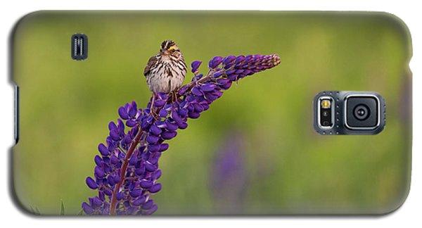 Savannah Sparrow Galaxy S5 Case