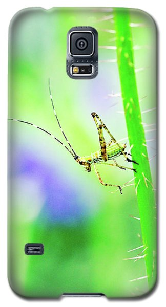 Say Hello To My Little Green Insect Friend Galaxy S5 Case