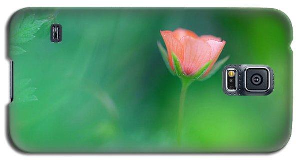 Scarlet Pimpernel Galaxy S5 Case