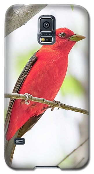 Scarlet Tanager Galaxy S5 Case