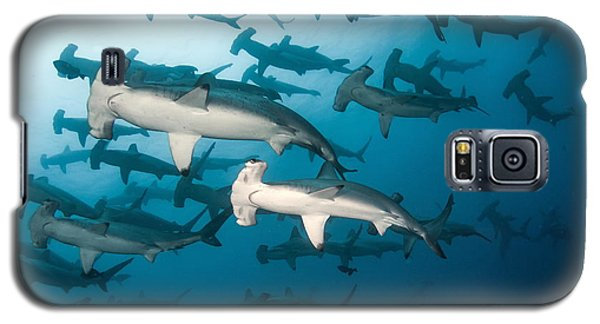 School Galaxy S5 Case - School Of Scalloped Hammerheads by Tomas Kotouc