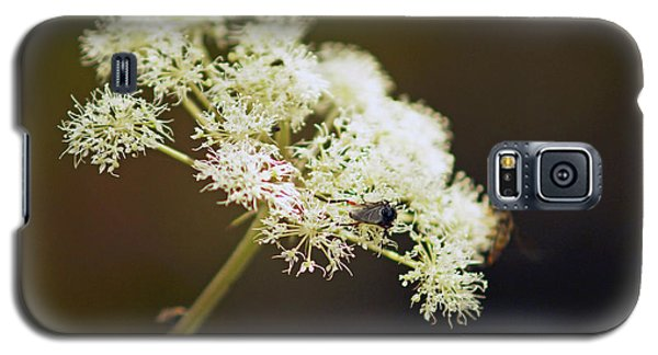 Scotland. Loch Rannoch. White Flowerhead. Galaxy S5 Case