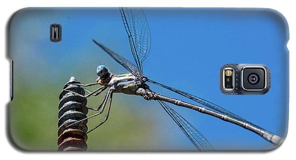 Screwy Dragonfly Galaxy S5 Case