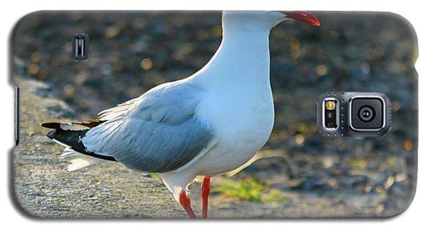 Seagull On The Breakwall Galaxy S5 Case