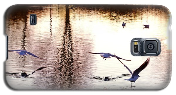 Seagulls In The Morning Galaxy S5 Case