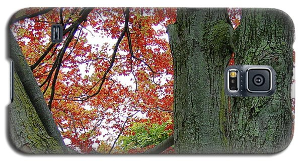 Seeing Autumn Galaxy S5 Case