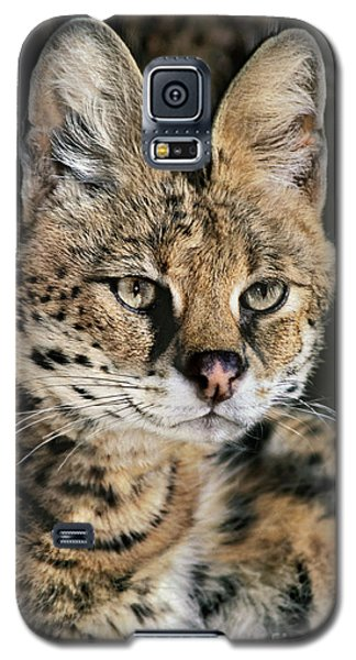 Serval Portrait Wildlife Rescue Galaxy S5 Case