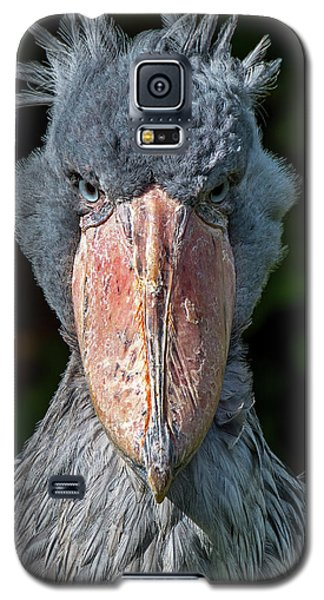 Shoe-billed Stork Galaxy S5 Case