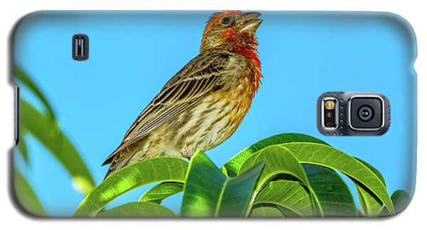 Singing House Finch Galaxy S5 Case