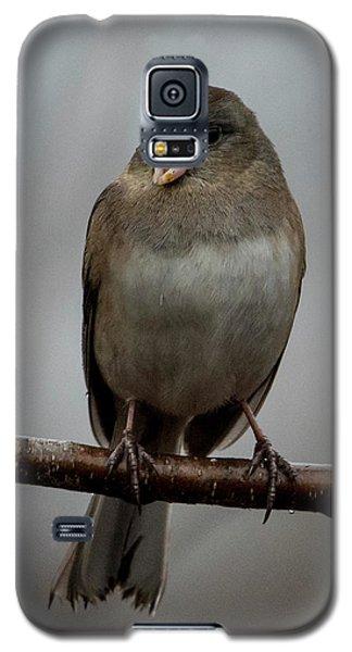 Singing Junco 1 Galaxy S5 Case