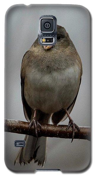 Singing Junco 2 Galaxy S5 Case