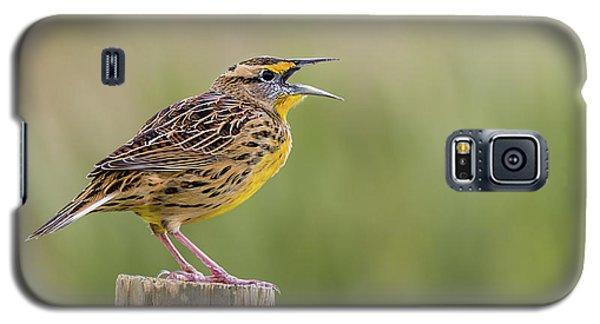 Singing Meadowlark Galaxy S5 Case
