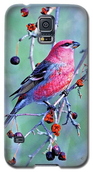 Sitting Pretty Galaxy S5 Case