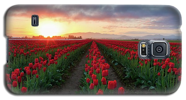 Skagit Valley Sunrise Galaxy S5 Case