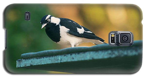 Small Magpie Lark Outside In The Afternoon Galaxy S5 Case