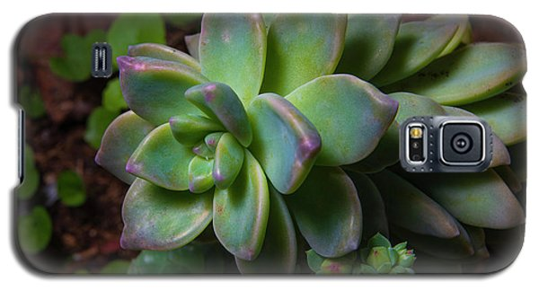 Small Succulents Galaxy S5 Case