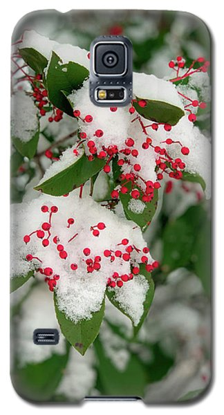 Snow Covered Winter Berries Galaxy S5 Case