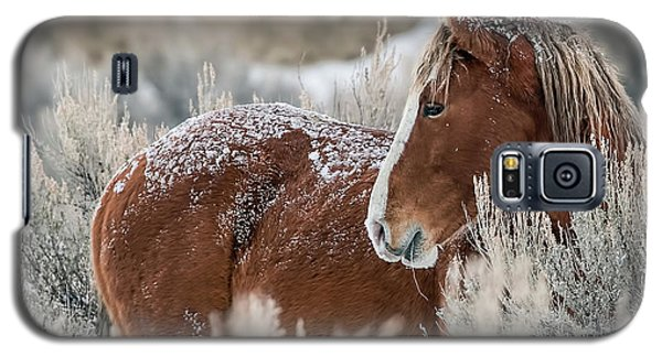 Snow Dusted Mustang Stallion Galaxy S5 Case