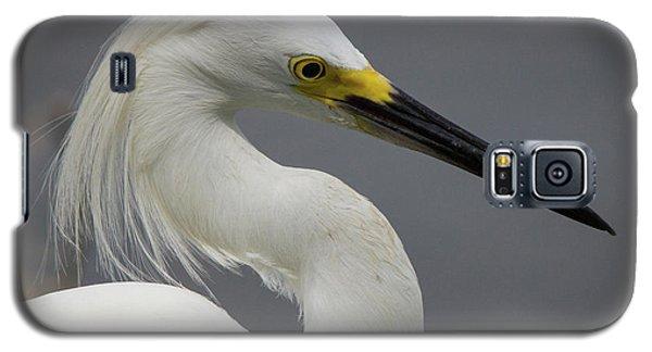 Snow Egret Portrait Galaxy S5 Case
