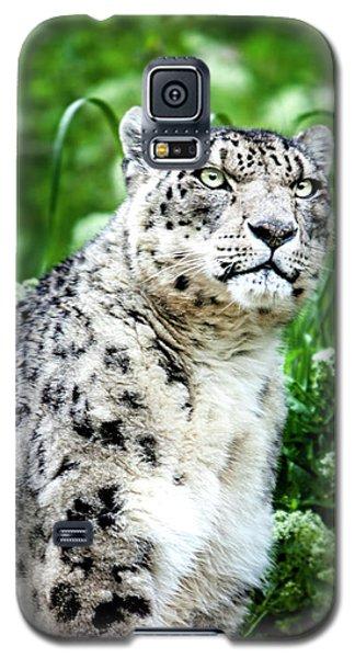 Snow Leopard, Leopard Art, Animal Decor, Nursery Decor, Game Room Decor,  Galaxy S5 Case