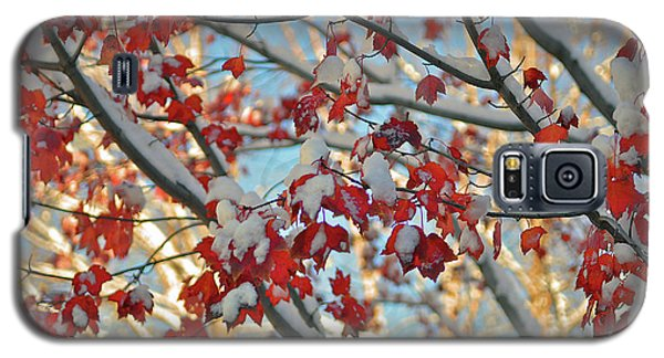Snow On Maple Leaves Galaxy S5 Case