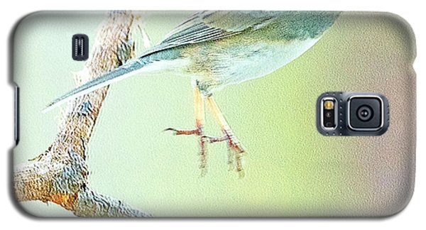 Snowbird Jumps From Tree Branch Galaxy S5 Case