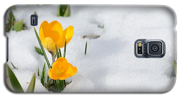 Icy Galaxy S5 Case - Snowdrops Crocus Flowers In The Snow by Er 09