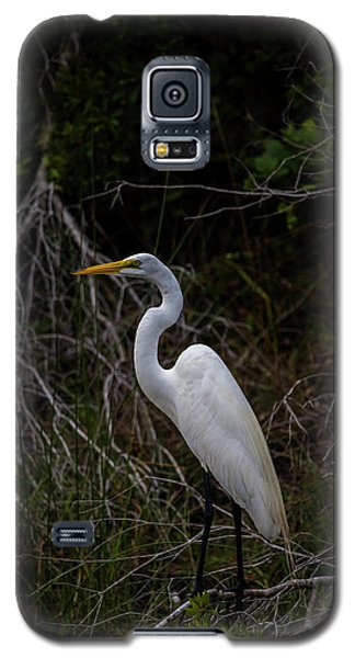 Great Egret On A Hot Summer Day Galaxy S5 Case