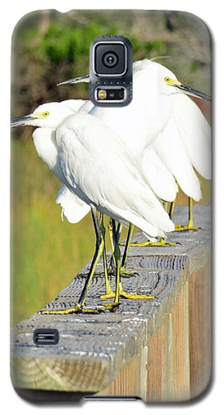 Snowy Egrets Eyeballing A Marsh On Jekyll Island Galaxy S5 Case