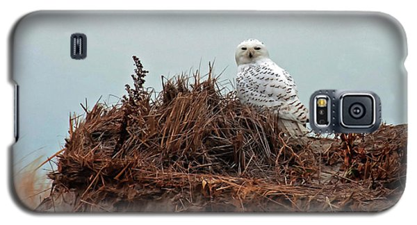 Snowy Owl In The Dunes Galaxy S5 Case