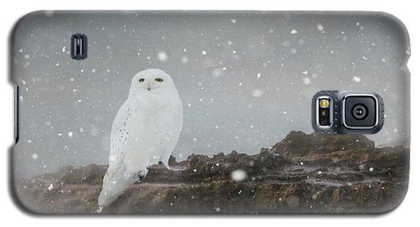 Snowy Owl On A Ledge Galaxy S5 Case