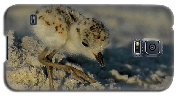 Snowy Plover On The Hunt Galaxy S5 Case