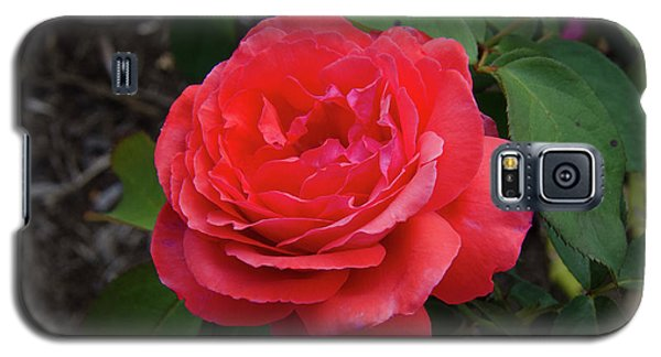 Solitary Rose Galaxy S5 Case