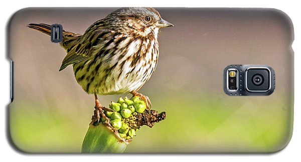 Songster Perching Galaxy S5 Case
